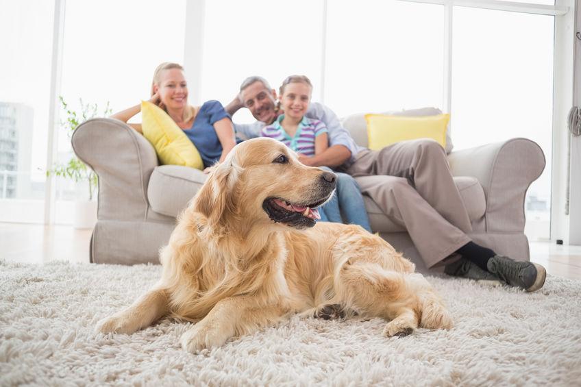 kutyafelszerelés webáruház